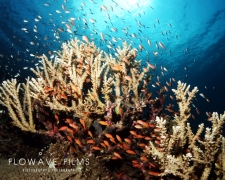 20150924_Angel_Reef-1