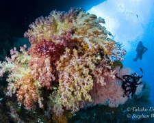 coral-47t-soft-coral-nu-4861-stephen-wong-copy_01